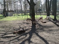 bialystok akcent zoo cd