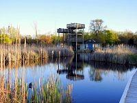 Point Pelee National Park -Marsh Boardwalk.